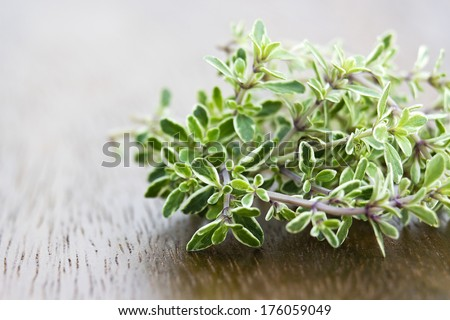 close up of fresh thyme - stock photo