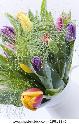 Close up of fresh Tulip bouquet in white jug
