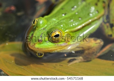 close up of frog on the leave