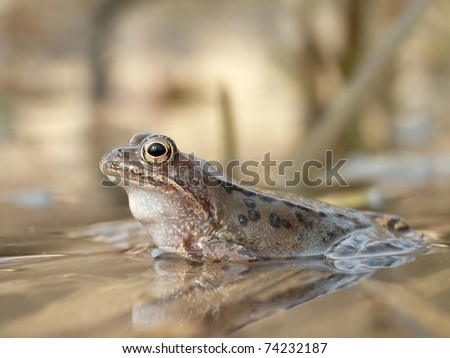 Close-up of frog on the shore of the pond. - stock photo