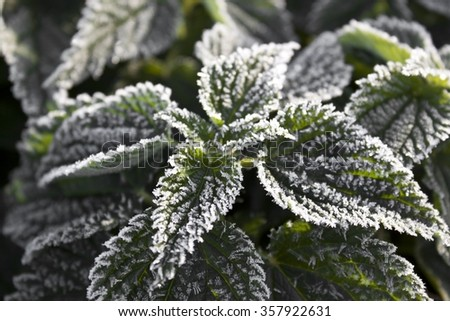 Close-up of frost - stock photo
