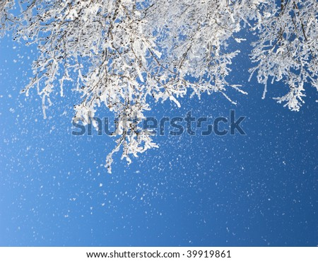 Close up of frozen branches and snow falling against blue sky. Shallow DOF.