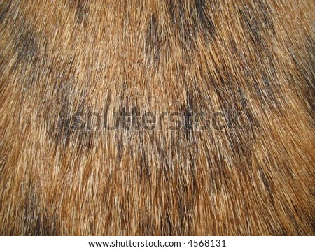 Close-up of fur on a dog - stock photo