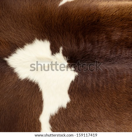 Close up of fur skin, brown cow. For background and texture. - stock photo