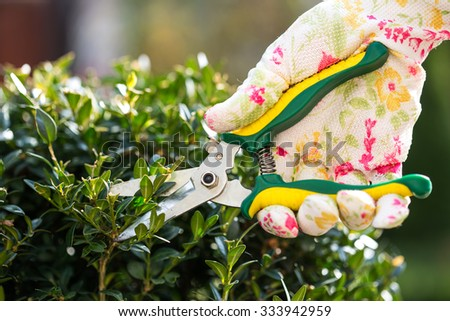 Close up of gardener trimming plant - stock photo