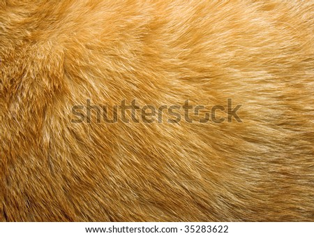 Close-up of ginger cat fur for texture or background