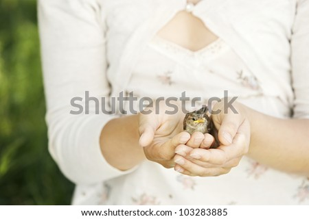 Close up of girl's hands holding a baby bird in them. - stock photo