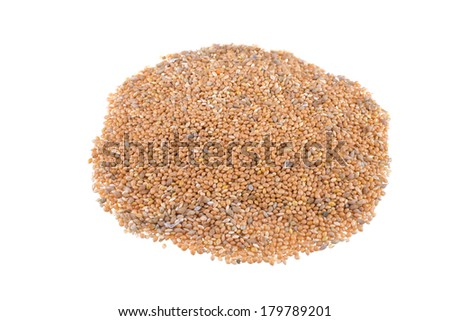 Close up of golden corn grains. isolated on white background - stock photo