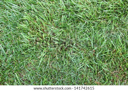 Close up of grass blades. - stock photo