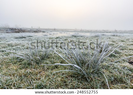 Close up of grass in a grassland with hoar frost on a winter day - stock photo