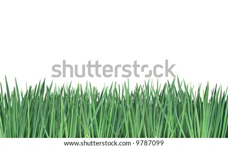 Close-up of grass isolated on white background. - stock photo