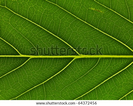 close up of green - stock photo