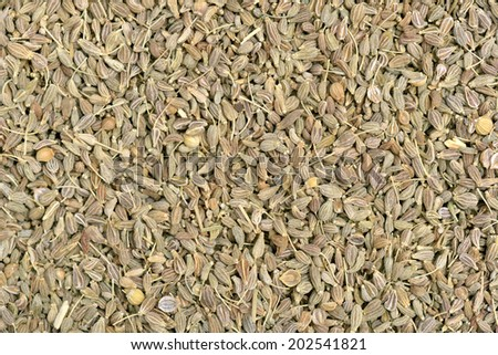 Close-up of green anis seeds to use as background - stock photo