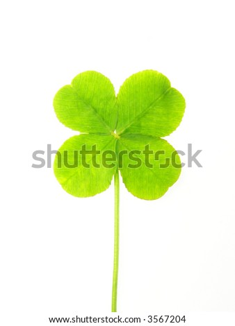 Close-up of green clover leaf against white background - stock photo