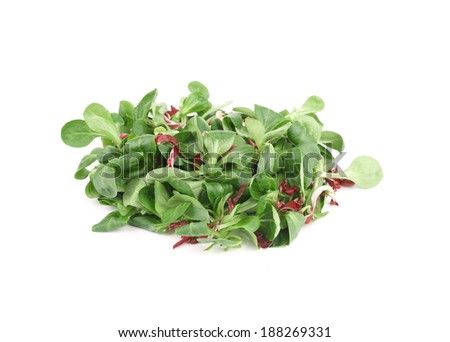 Close up of green fresh basil. Isolated on a white background. - stock photo