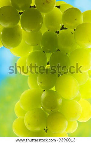 Close-up of green grape cluster - stock photo