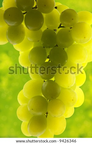 Close-up of green grape cluster on green background - stock photo