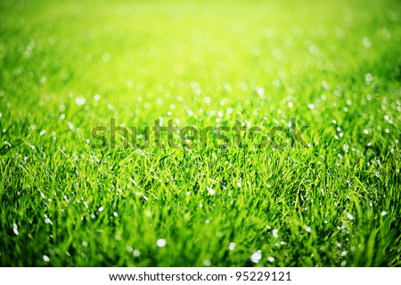 Close up of green grass with focus point. - stock photo