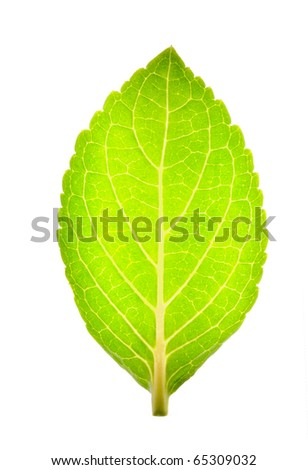 Close up of green leaf - stock photo