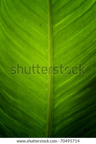close up of green leave - stock photo