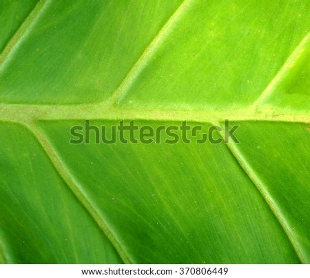 close up of green leave with texture - stock photo