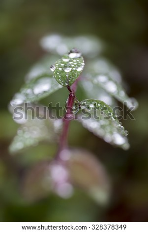 Close-up of green leaves with waterdrops in autumn - stock photo