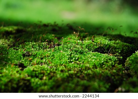 Close-up of green moss - stock photo