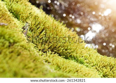 close up of green moss on the rock in the waterfall. - stock photo