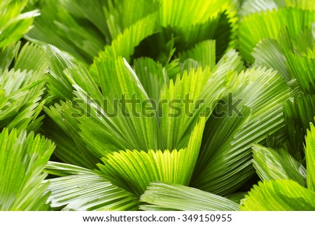 Close up of green palm leave texture  - stock photo