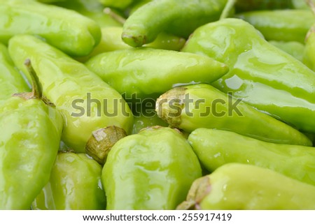 Close up of green peppers with water drops - stock photo