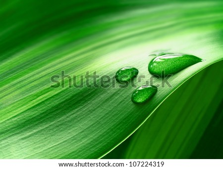 Close-up of green plant leaf - stock photo