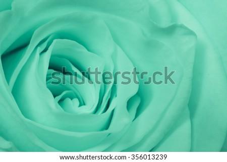 close up of green rose petals - stock photo