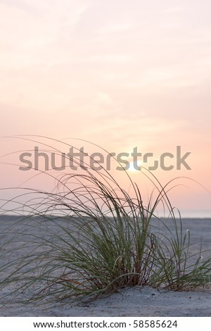 close up of green sea grass on sand dune over sunrise - stock photo