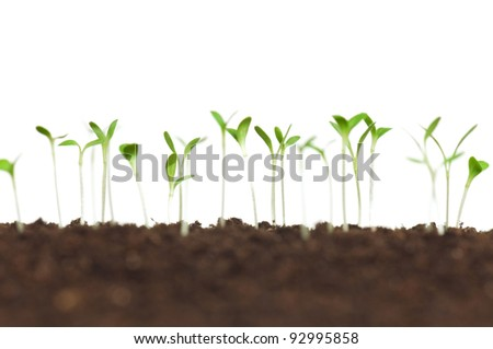 Close-up of green seedling growing out of soil - stock photo