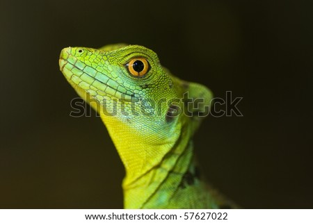 Close up of green tree lizard - stock photo
