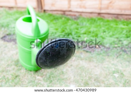 Close-up of green watering can with black rose in garden
