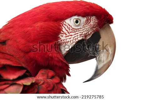Close-up of green-winged scarlet macaw over white background - stock photo