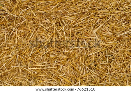 Close up of ground. Texture of straw. - stock photo