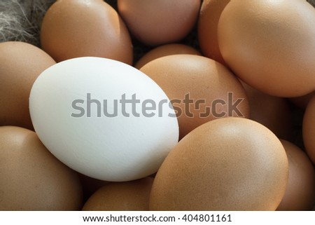 Close up of group of identical chicken eggs where there is one different from the rest. This shows the uniqueness of individual contrasting with the mass  - stock photo