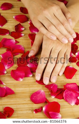 Close-up of hands are on red rose petals