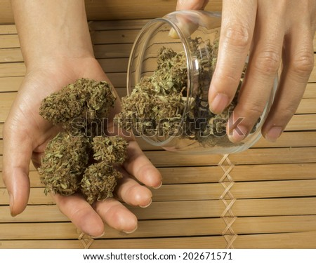 close up of hands holding marijuana buds - stock photo