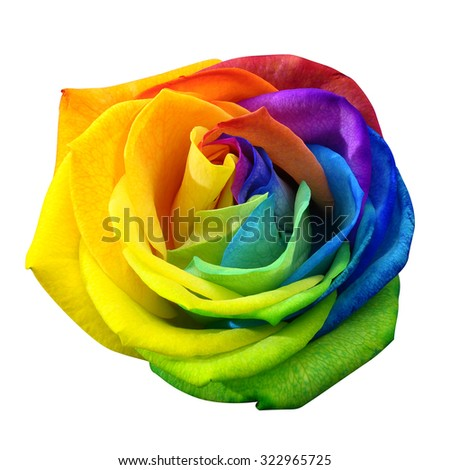 Close up of happy rose : rainbow flower with colored petals  isolated by clipping path on white background - stock photo