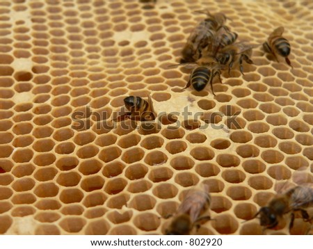 Close-up of honey cells - stock photo