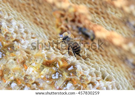 close-up of honeycomb and have honey bee for design food nature background. - stock photo