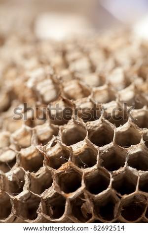Close up of honeycombs - stock photo