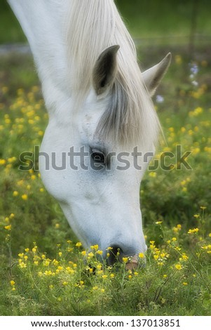 Close up of Horse Grazing