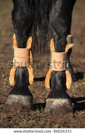 Close up of horse legs with boots for protection - stock photo