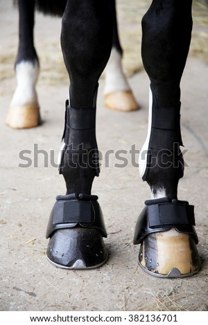Close up of horse legs with tendon boots.  Close up of horse legs with bandages and hoof boots  - stock photo