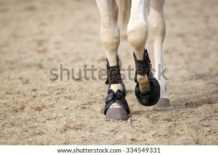 Close up of horse legs with tendon boots on the sandy ground - stock photo