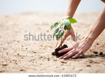 Close-up of human hands taking care of green branch with leaves in soil - stock photo